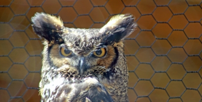 Not Sure Whooo You Are Looking At ?
