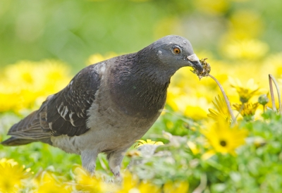 Eating Daisies