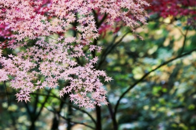 Depth Of Fall At Japanese Garden Pdx