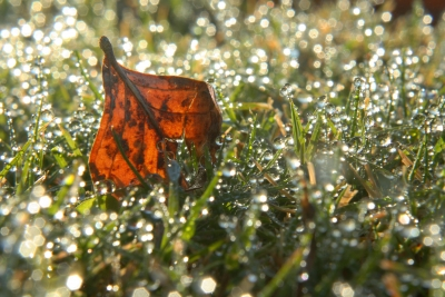 Leaf Among The Dew