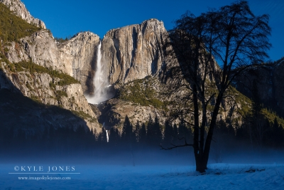 Yosemite Falls And Mist Tree
