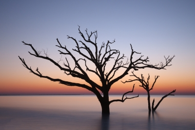 Trees In The Sea