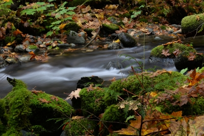 Goldstream Fall.