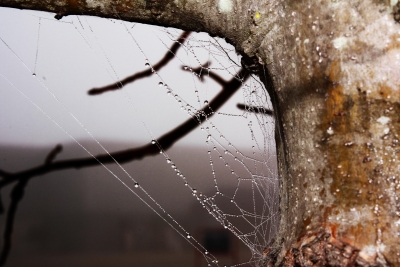 A Spider's Web On A Misty Morning