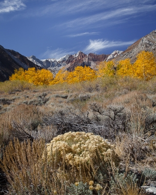 Eastern Sierra Fall Still Life