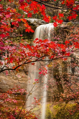 Waterfall And Maple Leaves