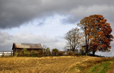 The Old Barn And The Tree