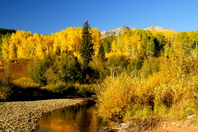 Bright Autumn Day In Gunnison National Forest