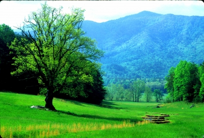 Cades Cove Green Valley