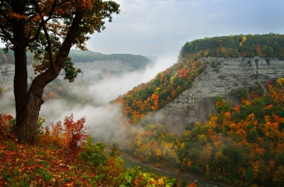 Foggy Fall Morning At Big Bend Of Letchworth