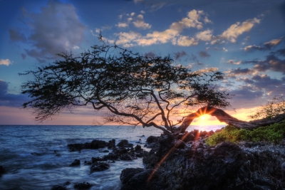 Sunset Through The Kiawe Tree