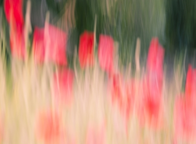 Red Poppies In Abstract