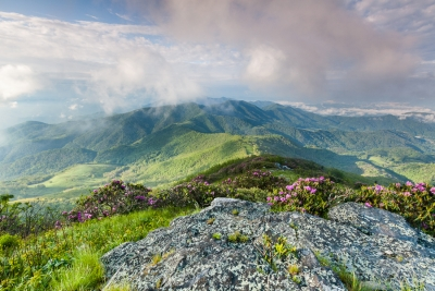 Roan Highlands Ancient Appalachian Mountains Dressed In Spring Green