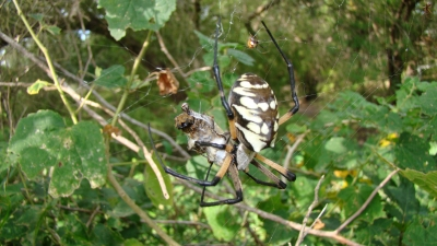 Opportunistic Spiders