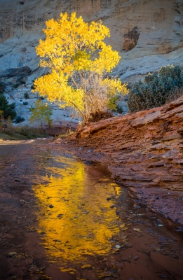 Gold On Pleasant Creek-capitol Reef