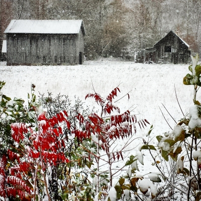 Snowy Fall Scene In Western North Carolina