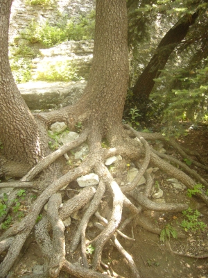 Roots.