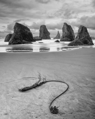 Seaweed And Sea Stacks, Bandon, Or