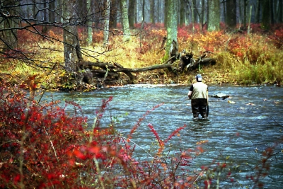 Penns Creek Fall Flyfishing