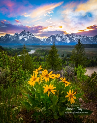 Grand Teton Snake River Wildflowers