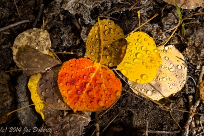 Fallen Leaves And Melted Snow, Bishop Creek, California