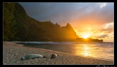 Monk Seal Sunset
