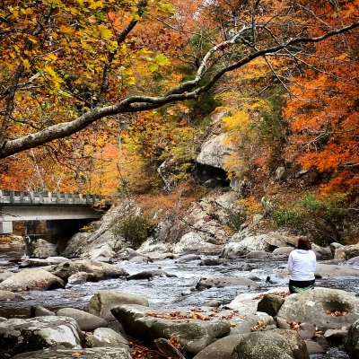 Fall In The Cherokee National Forest