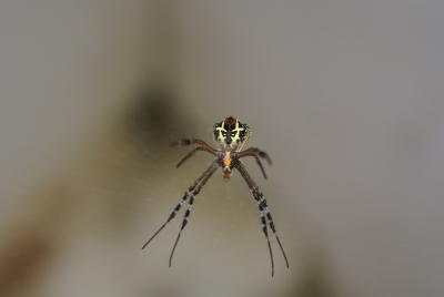 Spider Come To Me