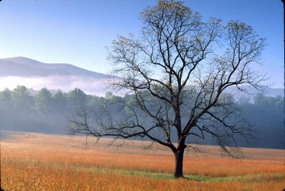 Cades Cove Field, Fog, And Tree