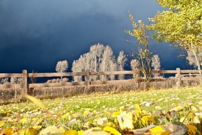 Golden Leaves, Autumn Storm