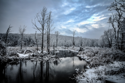 A Cold Day In The Swamp