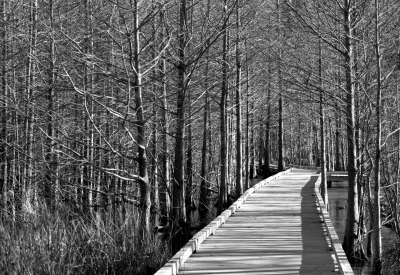 Boardwalk In B/w