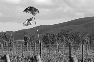Red, White, And Blue In The Vineyard