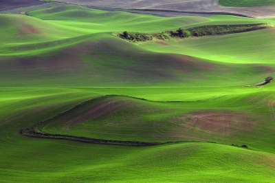 Lush Fields Of The Palouse