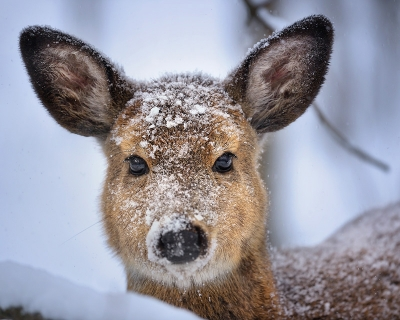 Doe's First Winter