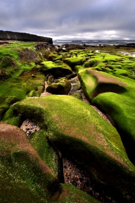 Mossy Rocks At Low Tide