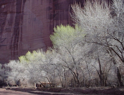 Spring In Canyon De Chelly