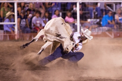Steer Wrestling Take Down