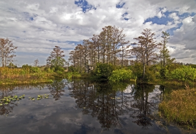 Loxahatchee Reflections