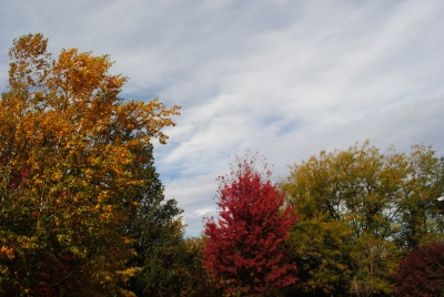 Pretty Fall Pictures