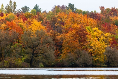 Lake Iroquois Foliage