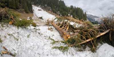 Winter Avalanche In Spring.