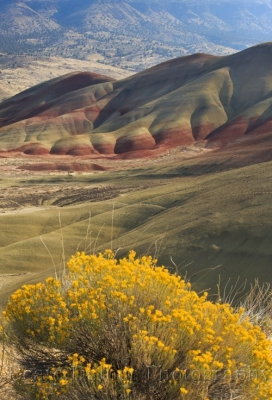 Sagebrush And Painted Hills