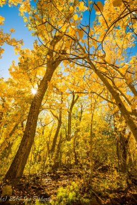 Fall Canopy Over Mcgee Creek
