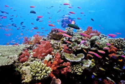 """shallow South Pacific Coral Reef"""