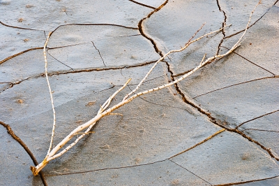 Death Valley Cracked Mud Pattern And Twig