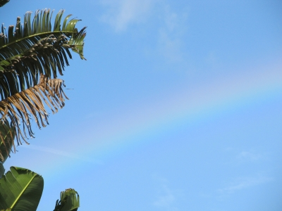 Tropical Rainbow2