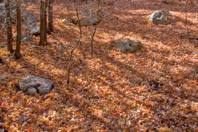 Lost Maples In The Fall