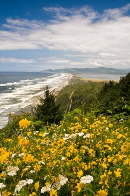 View From Cape Lookout, Flower Blanket