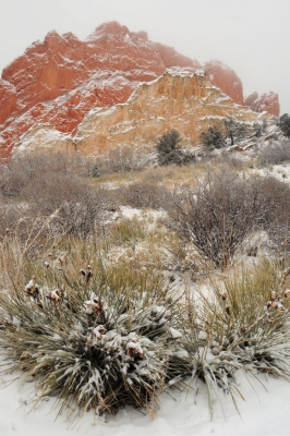 Kissing Camels And Yucca Snow